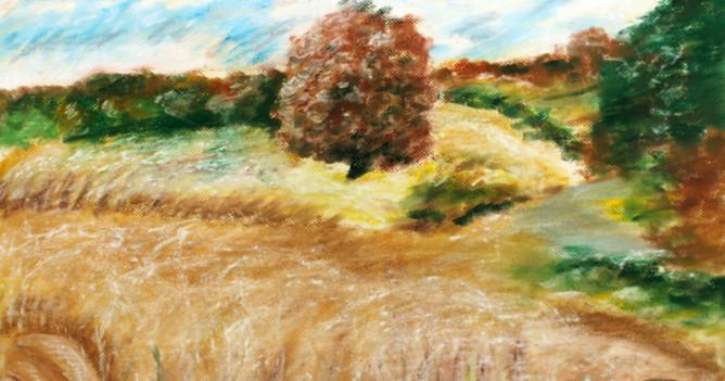 Augustové pole
